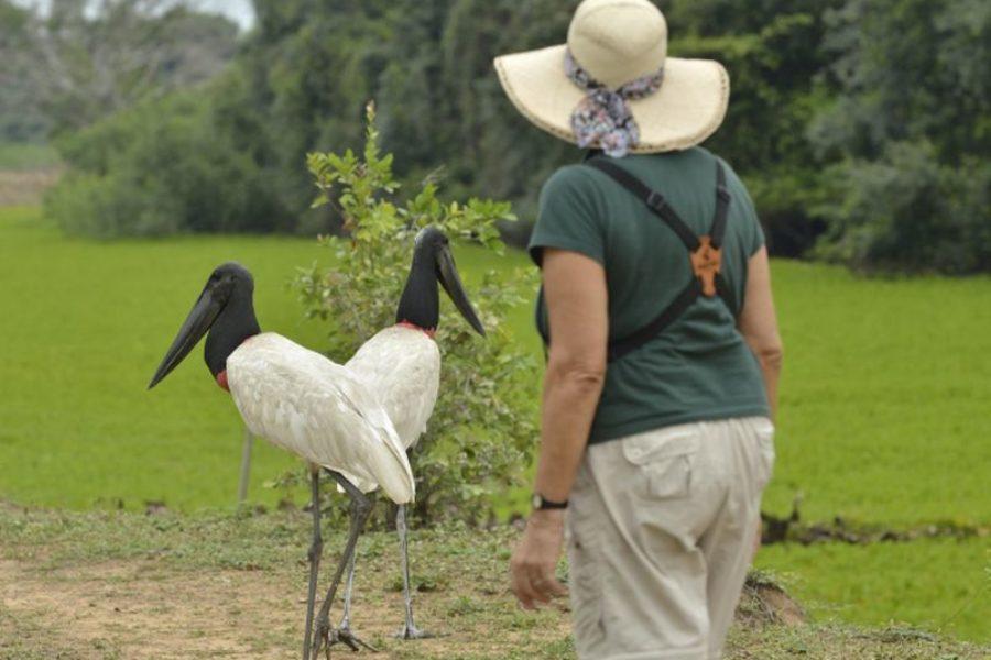 Southwild Lodge Wanderung Pantanal