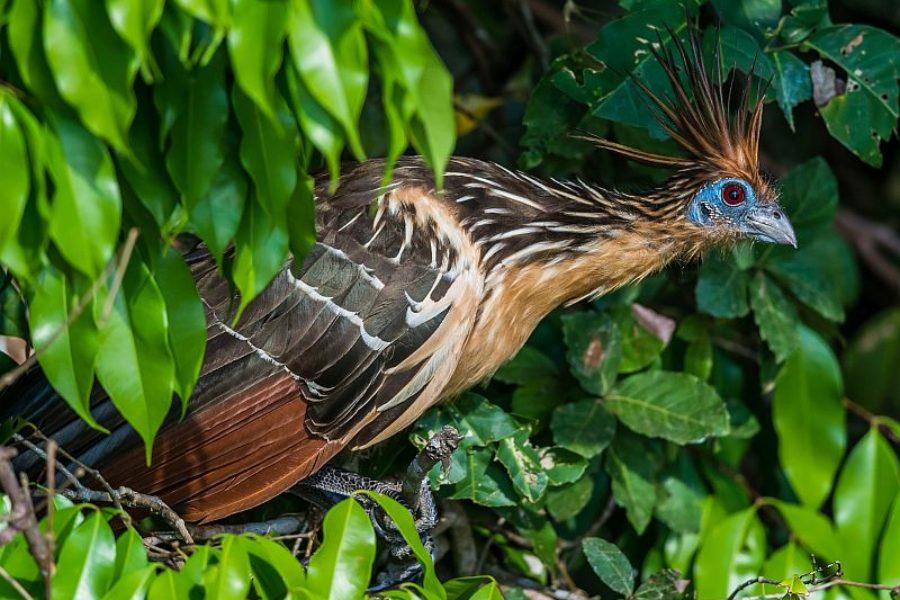 Brasilienreisen-Spezialist-Pantanal-Vogelbeobachtung-GloboTur