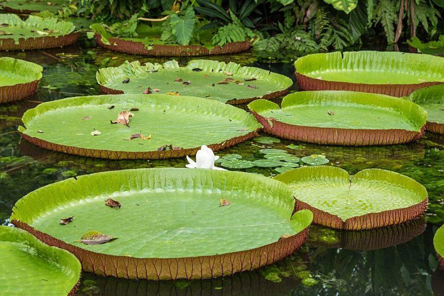 Belem Flora GloboTur