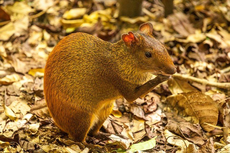 Fauna Belem Do Para GloboTur