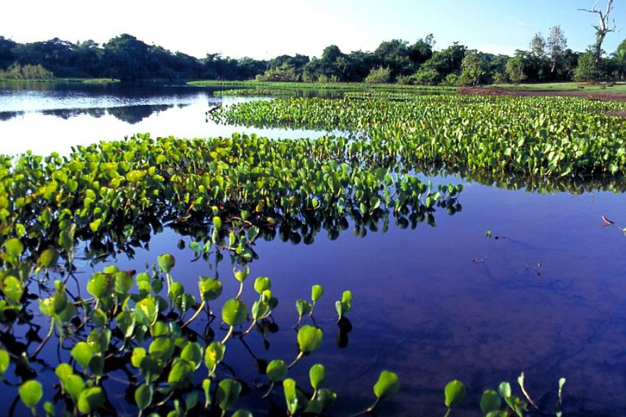 Pantanal Binnenfeuchtgebiet Embratur GloboTur
