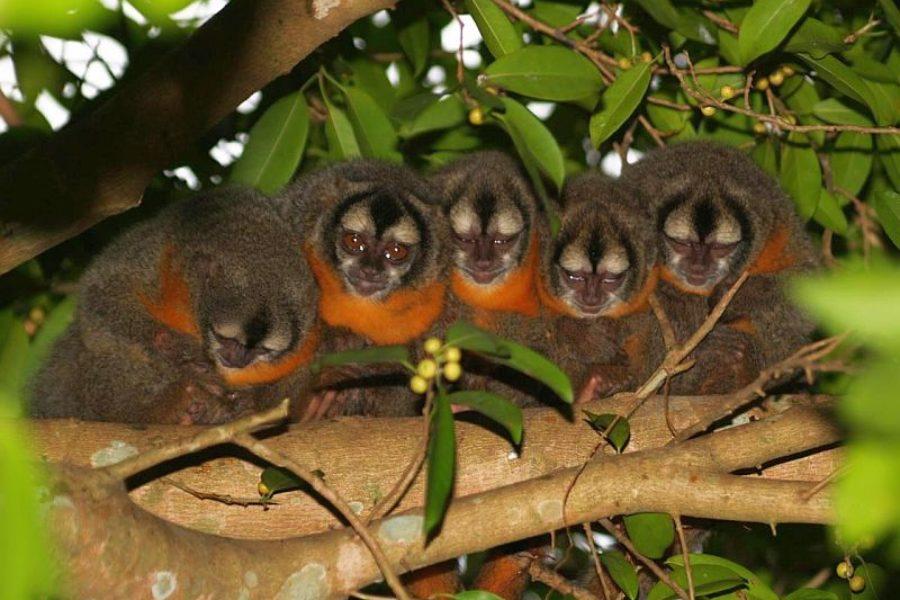 Tierbeobachtung Pantanal Mutum Brasilien
