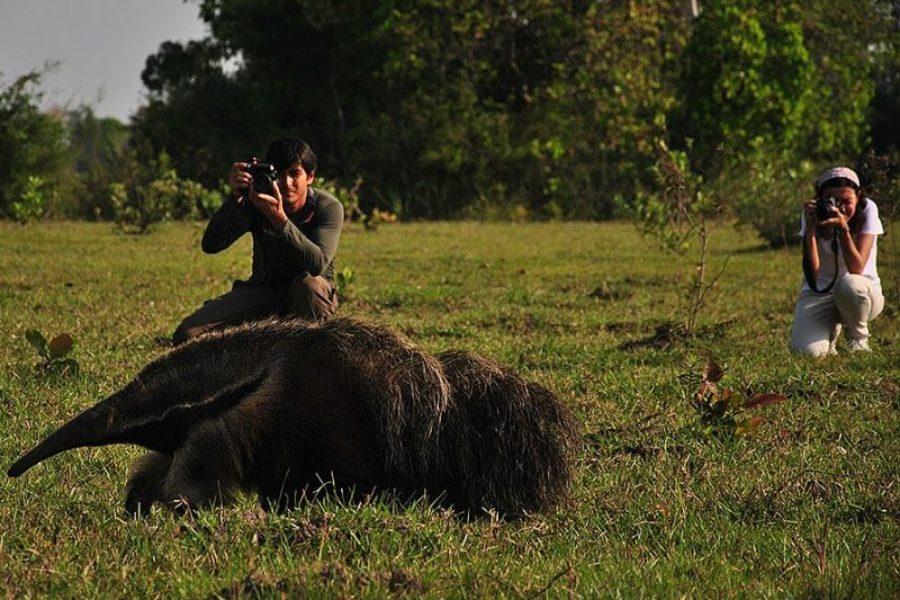 Tiersafari Pantanal Brasilien Visitms GloboTur