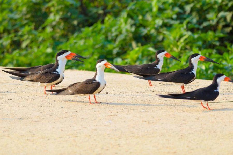 Vogel-am-Strand-Brasilien-GloboTur
