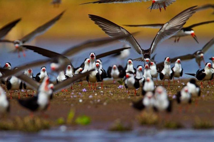 Pantanal Tierbeobachtung Mutum Schiffsreise GloboTur