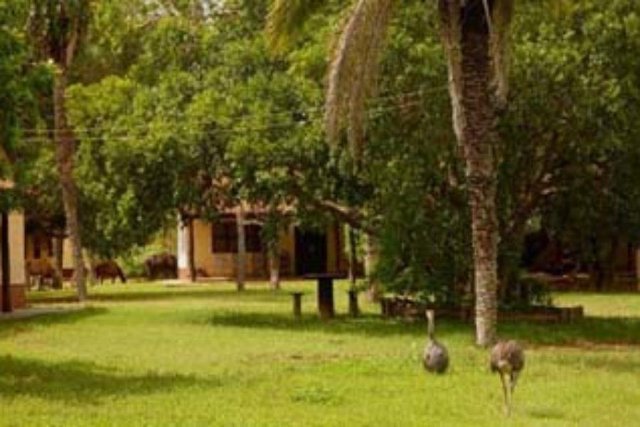 Pouso Alegre Pantanal Garten