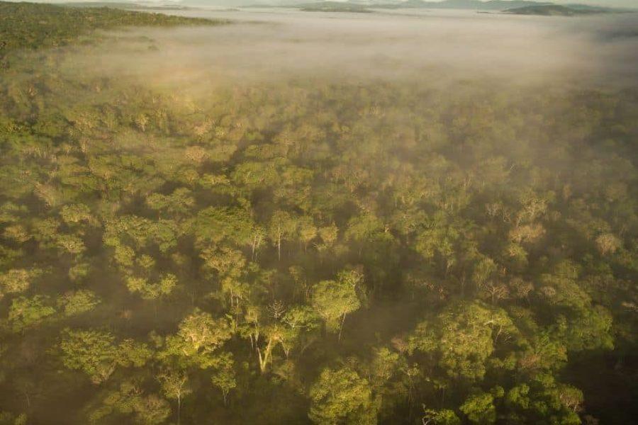 Atlantischer Regenwald In Brasilien Farm Almada Bahia GloboTur