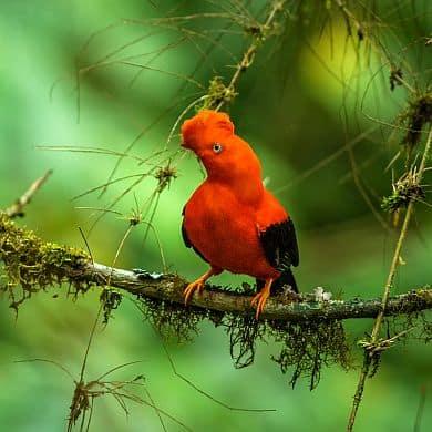 Amazonas Brasilien Vogelbeobachtung Birdwatching Vogelparadies GloboTur