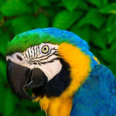 Brasilien-Spezialist-Vogelbeobachtung-Birdwatching-Natur-Fauna-GloboTur