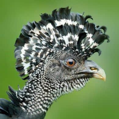 Brasilien-Vogelbeobachtung-Naturreisen-GloboTur-Spezialist