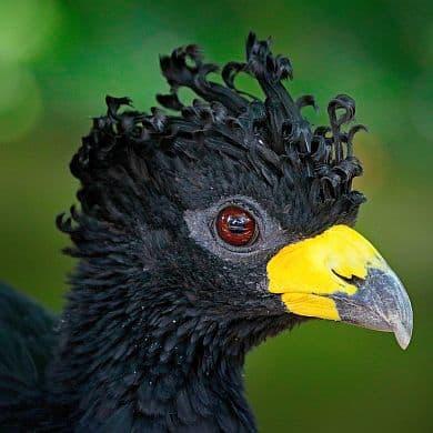Vogelbeobachtung-Brasilien-Spezialist-Birdwatching-GloboTur