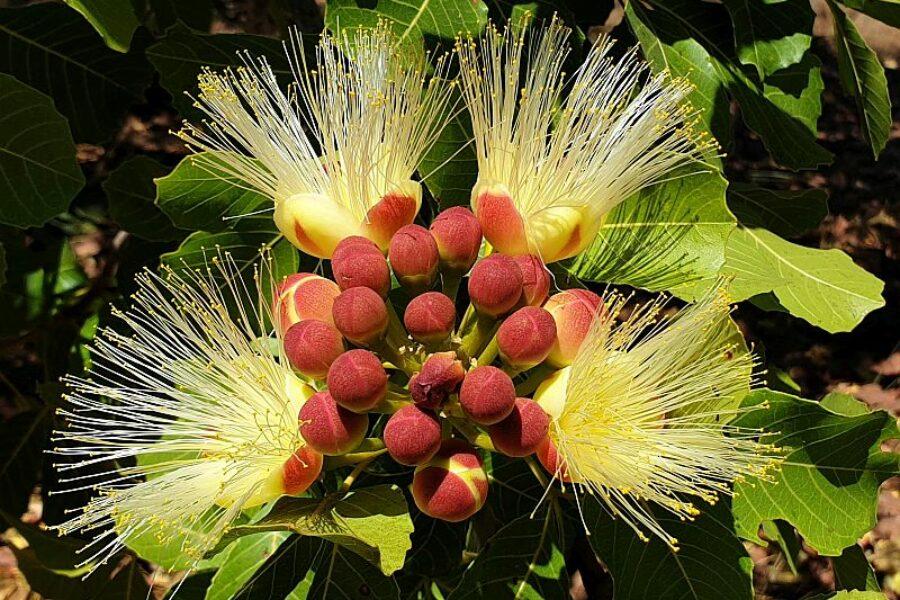 Brasilien-Cerrado-Biodiversitaet-der-Savanne-Trijuncao-GloboTur