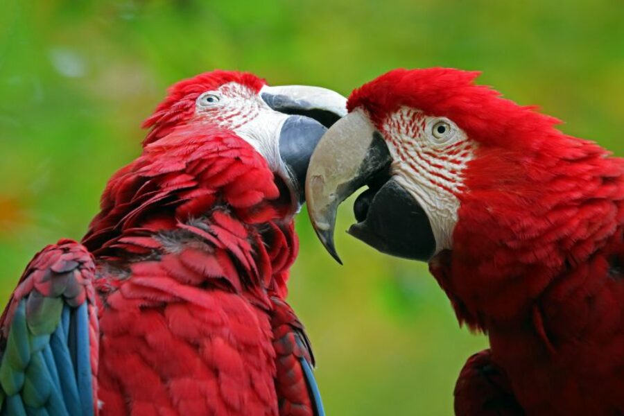 Brasilien-Reisen-Savanne-Tier-und-Naturreisen-GloboTur