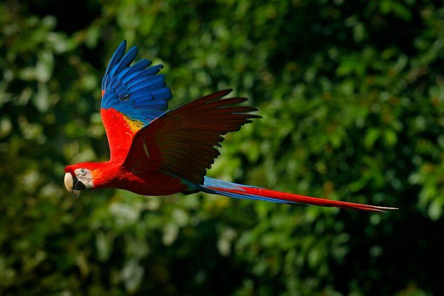 Brasilien-Spezialist-Natur-und-Tierbeobachtung